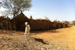 Chad 2012